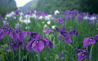 Бесплатные фото поле,ирисы,лепестки,трава,листья,стебли,зеленые