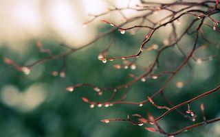 Фото бесплатно ветви, капли, дождь