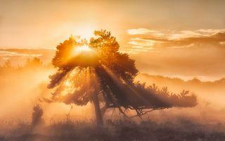 Бесплатные фото закат, дерево, солнце, туман