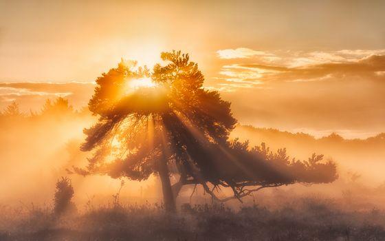 Бесплатные фото закат,дерево,солнце,туман