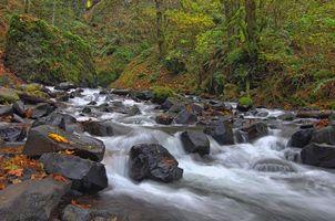 Бесплатные фото лес,деревья,река,камни,течение,природа
