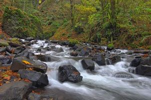Фото бесплатно лес, деревья, река
