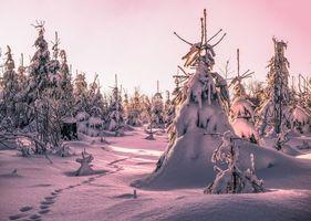 Фото бесплатно зима, снег, сугробы, следы, деревья, ели, пейзаж