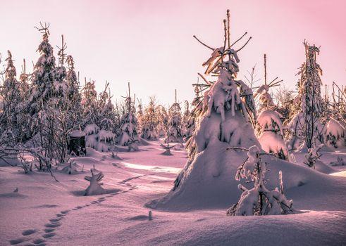 Бесплатные фото зима,снег,сугробы,следы,деревья,ели,пейзаж