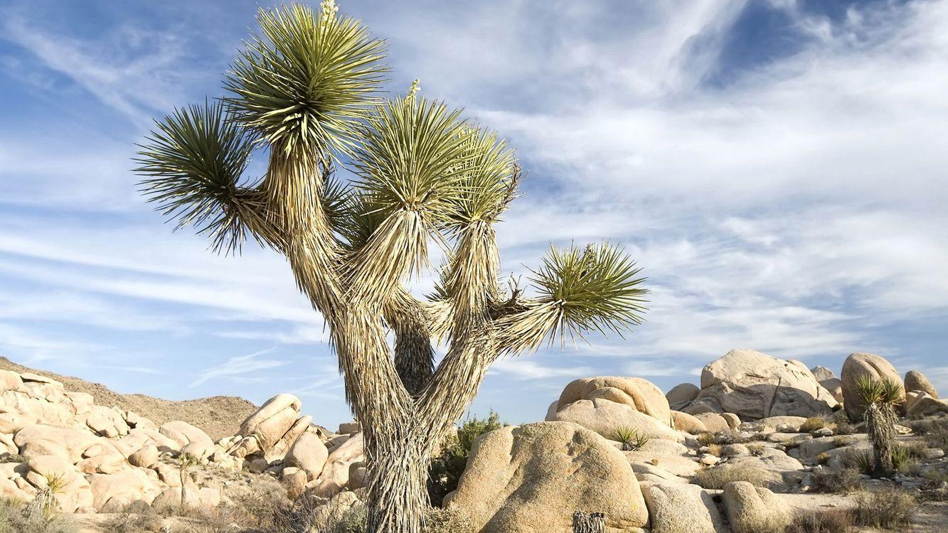 Фото кактусы камни валуны - бесплатные картинки на Fonwall