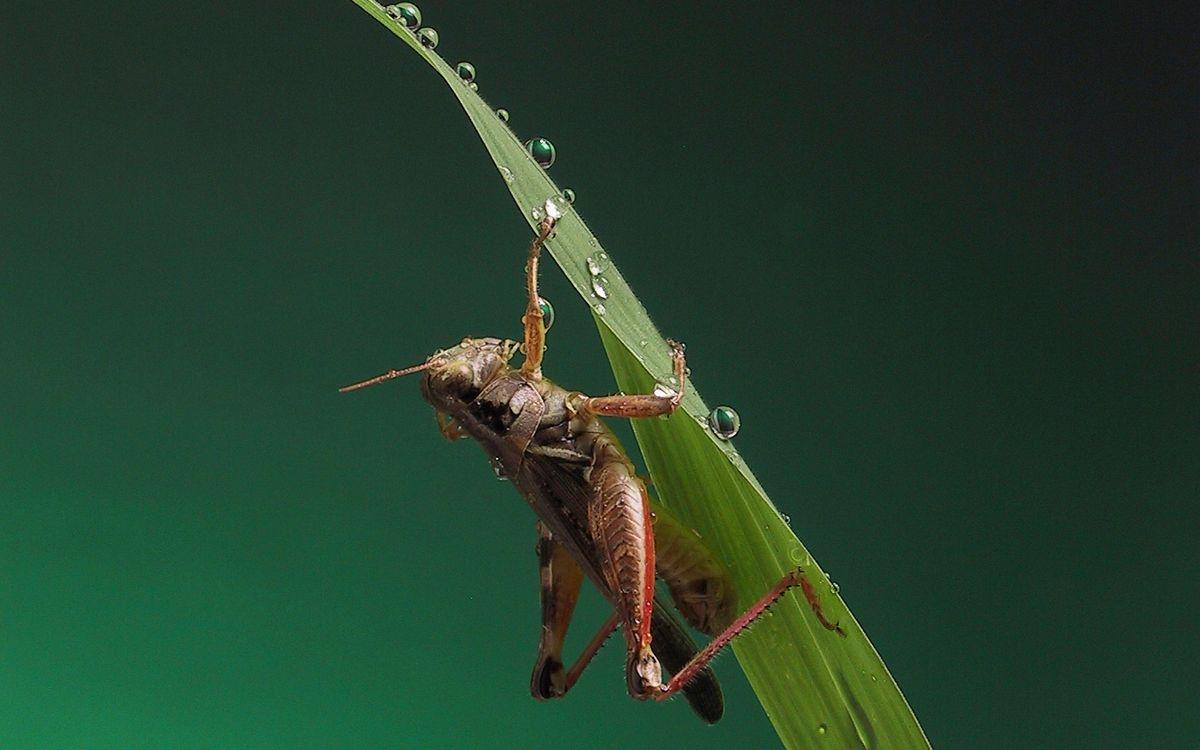 Фото кузнечик лапки трава - бесплатные картинки на Fonwall