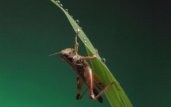 Фото бесплатно кузнечик, лапки, трава