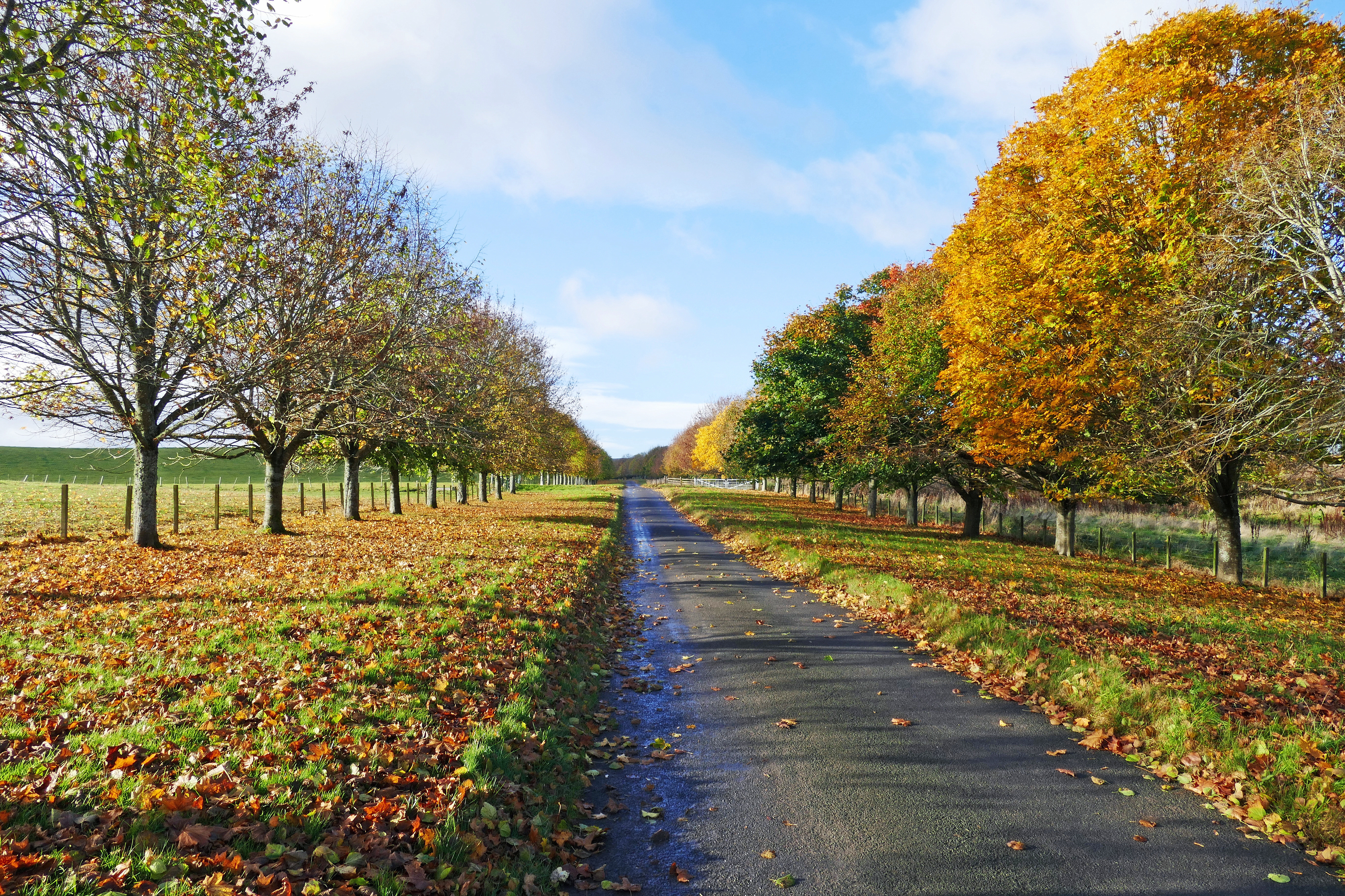 обои осень, дорога, поле, деревья картинки фото