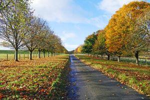 Фото бесплатно осень, дорога, поле