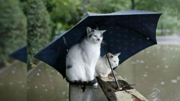 Фото бесплатно бревна, кошки, зонтик