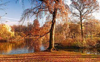 Фото бесплатно осень, река, листопад