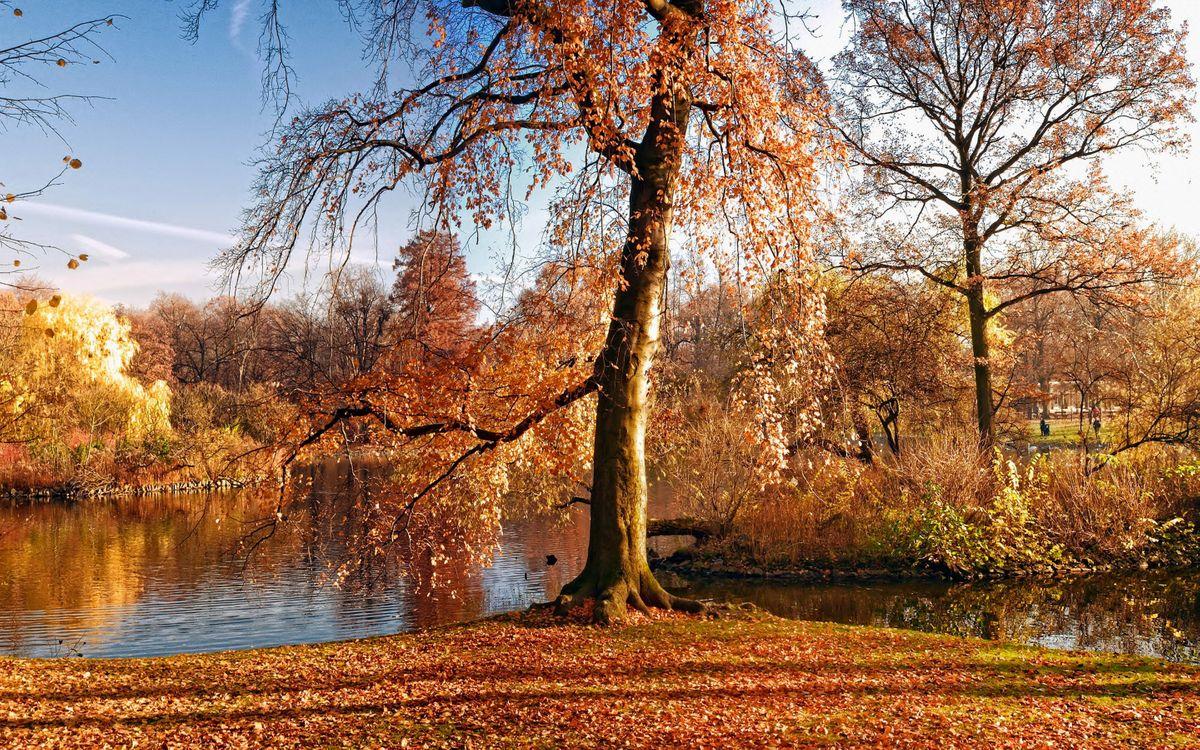 Обои осень, река, листопад картинки на телефон