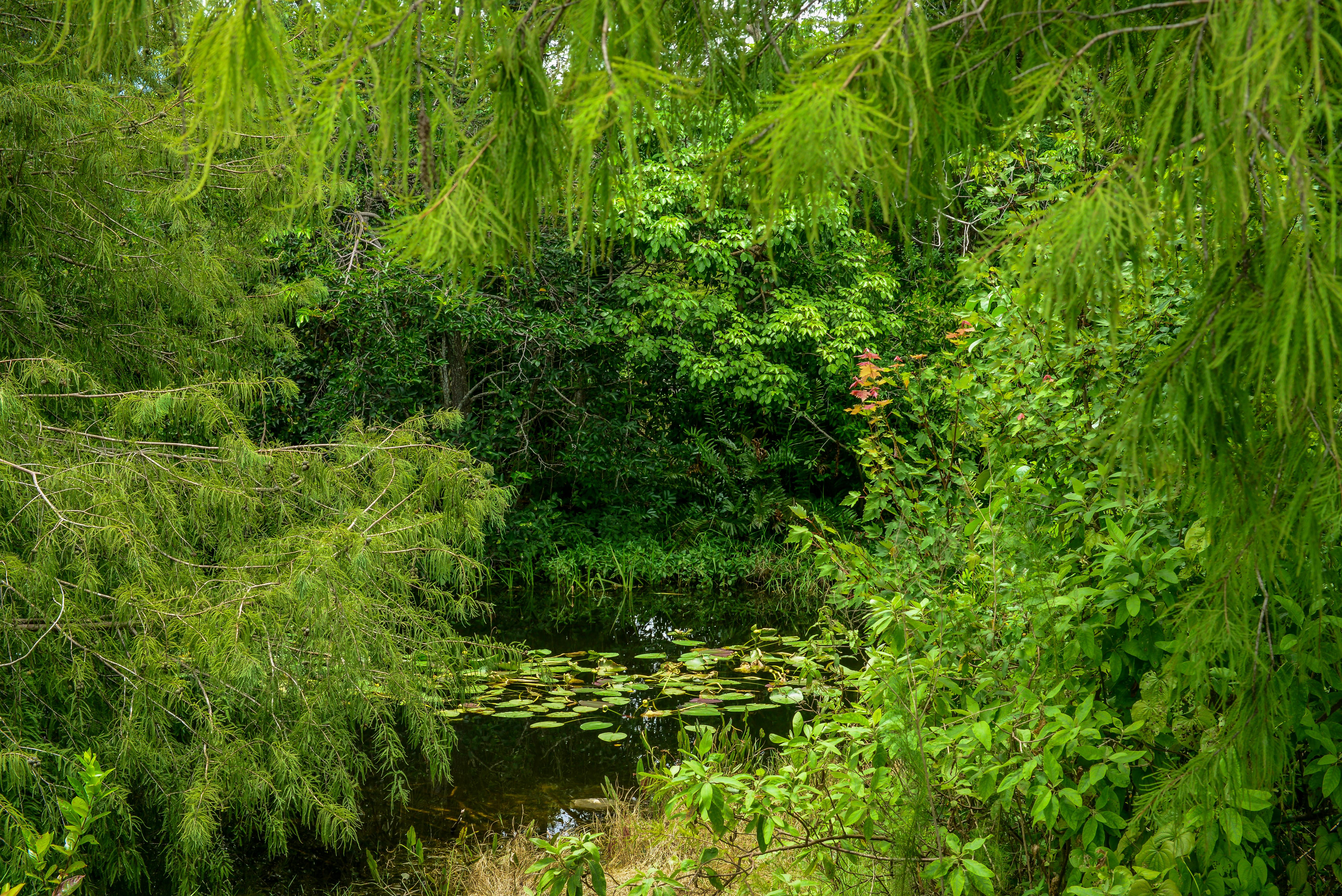 обои райский уголок, лес, парк, водоём картинки фото