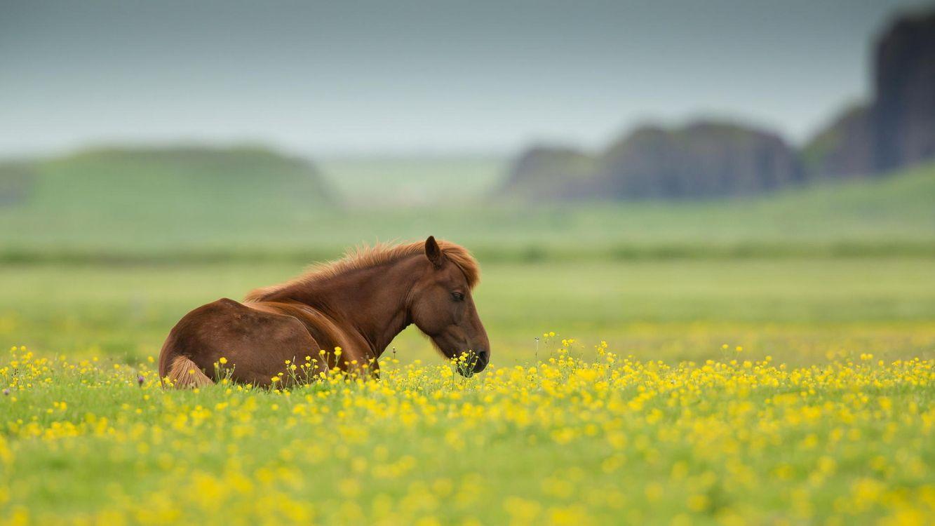 Картинка лошадь, конь, морда, грива, трава, пастбище на рабочий стол. Скачать фото обои животные