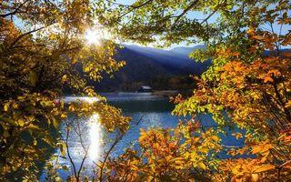 Бесплатные фото река,лес,ветви,осень,солнце