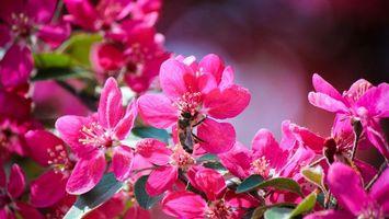 Бесплатные фото цветочки,лепестки,розовые,пестики,тычинки,листья