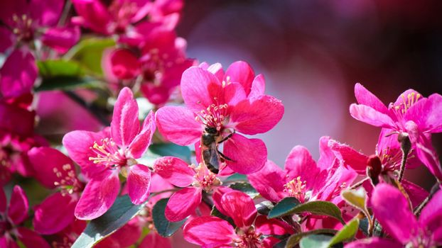Photo free flowers, stamens, pink