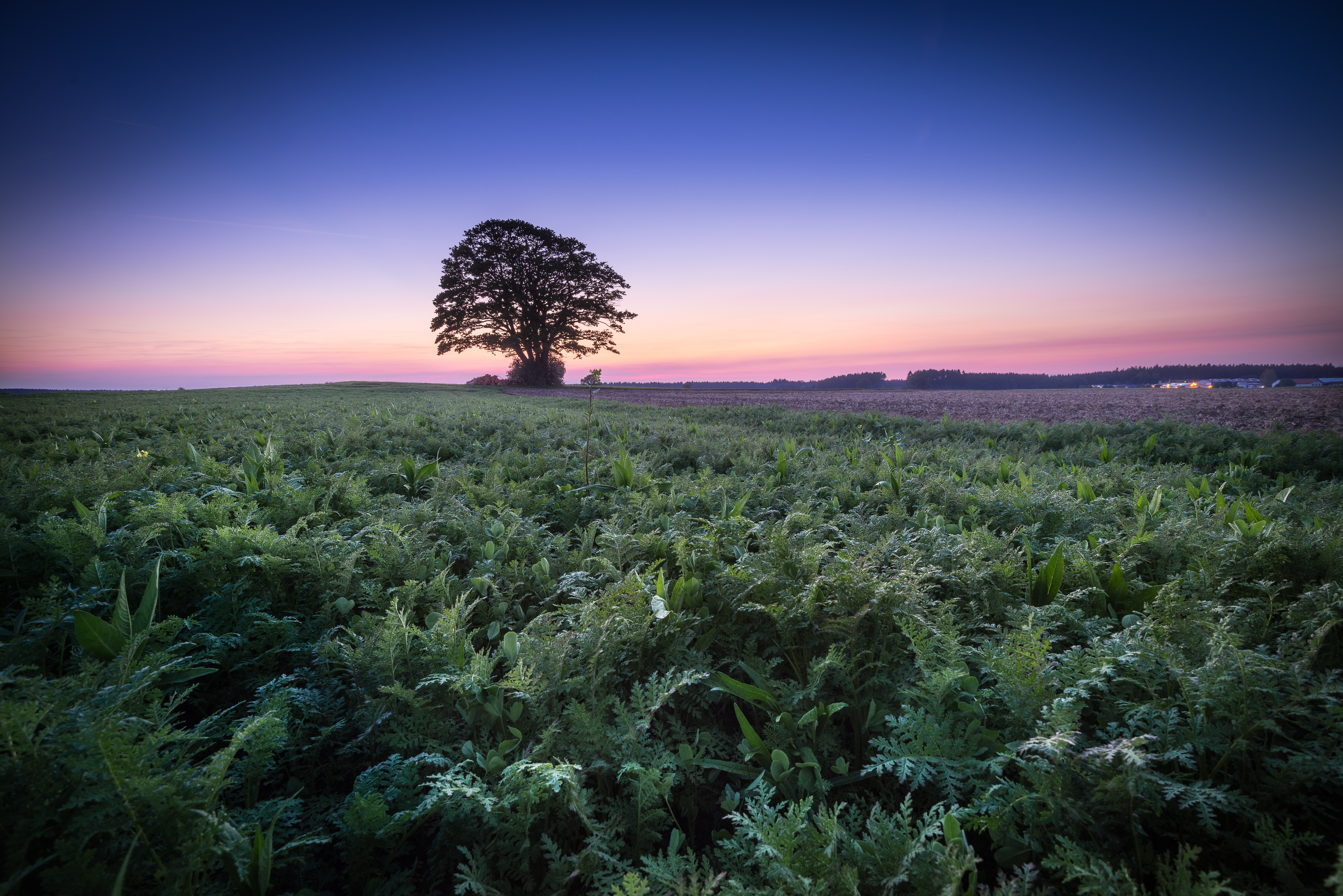 обои закат, поле, дерево, пейзаж картинки фото