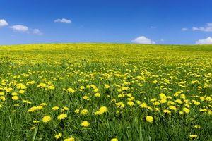 Фото бесплатно поле, одуванчики, небо