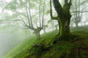 Фото бесплатно природа, мох, туман
