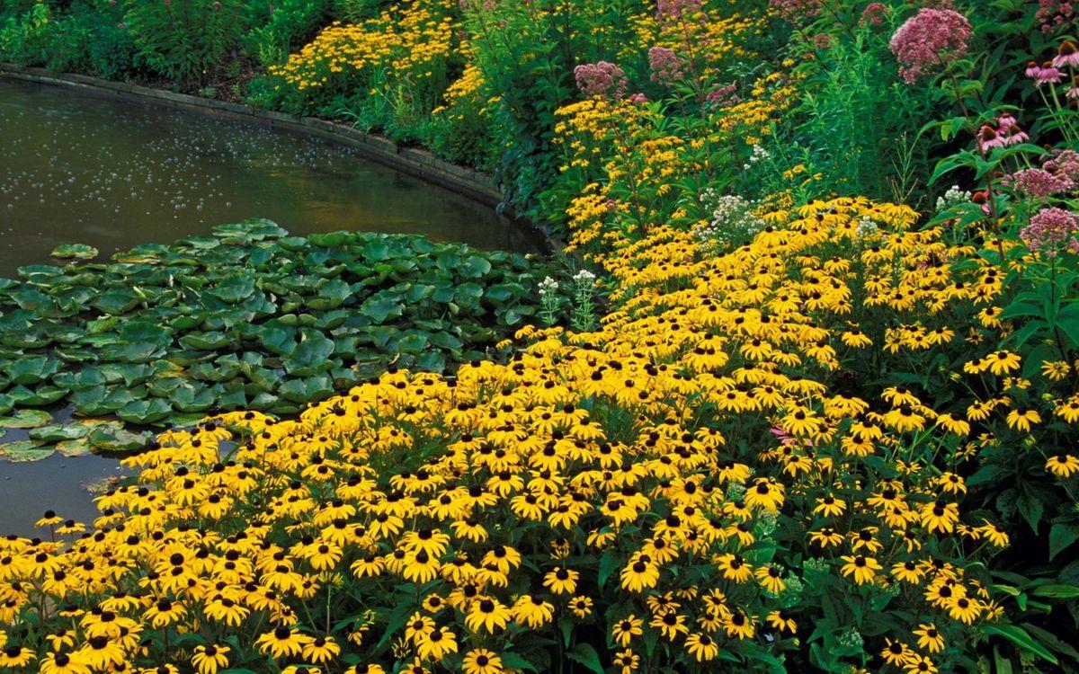 Фото бесплатно пруд, кувшинки, растения, цветочки, ландшафтный дизайн, цветы