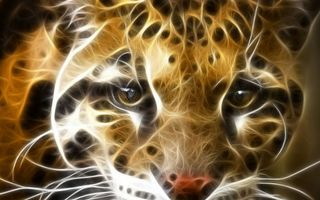 Заставки кошка, леопард, морда, глаза, усы