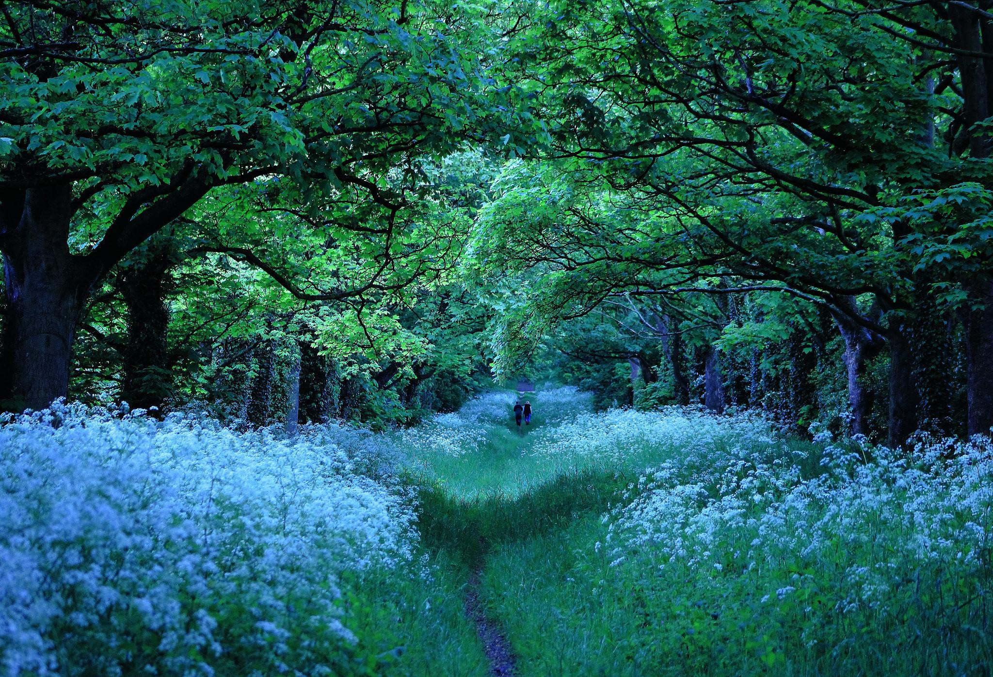 обои лес, деревья, цветы, тропинка картинки фото