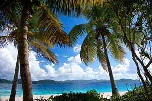 Бесплатные фото море,берег,пальмы,пляж,пейзаж