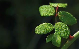 Фото бесплатно стебель, шипы, листья