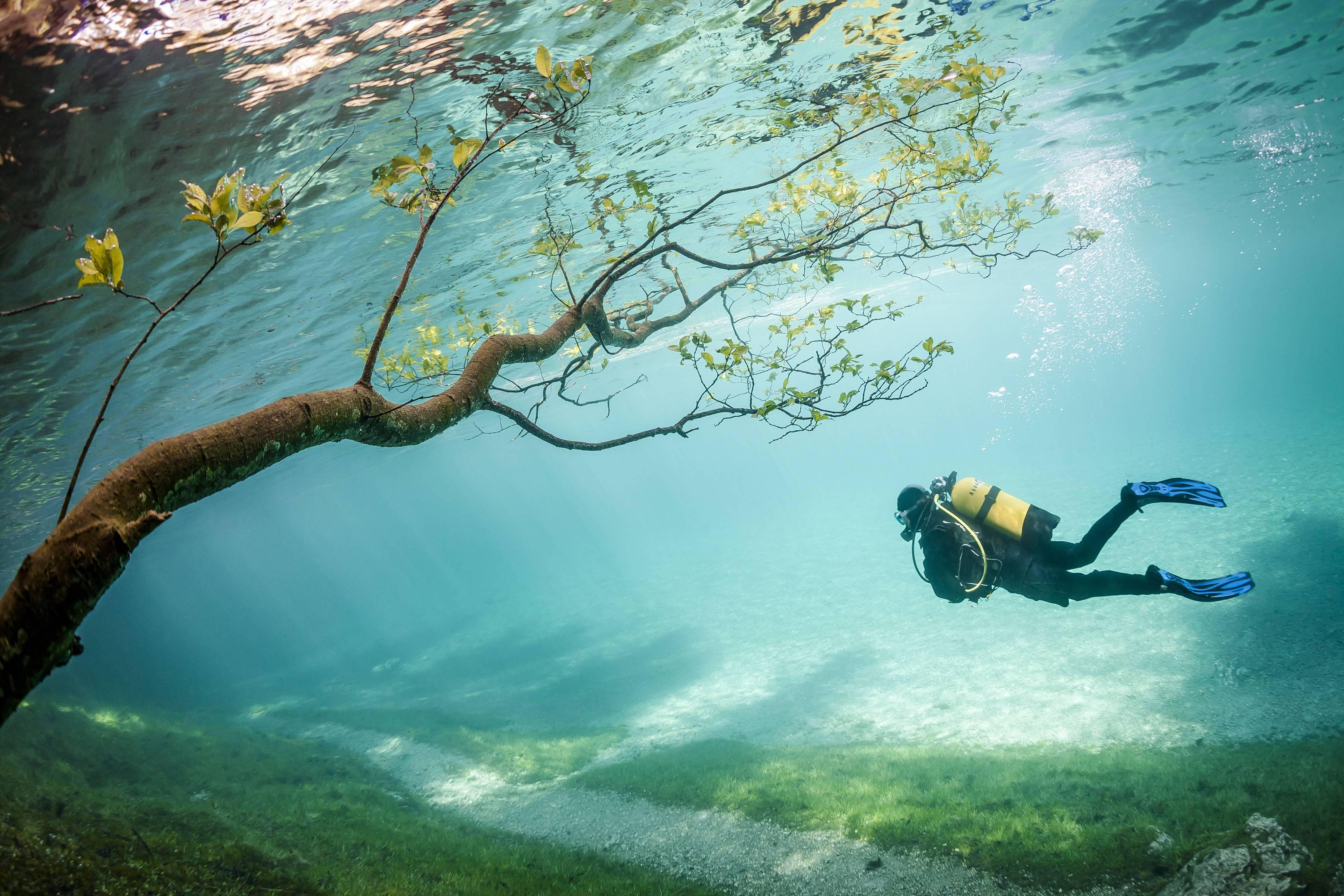 обои аквалангист, дайвер, креатив, тропинка картинки фото