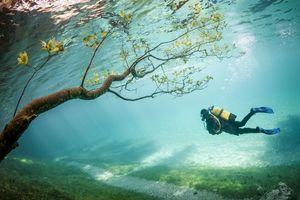 Фото бесплатно аквалангист, дайвер, креатив