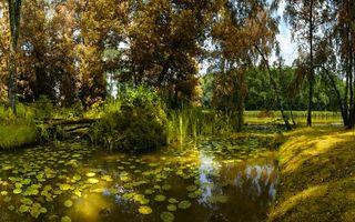 Бесплатные фото озеро,камыши,кувшинки,коряги,берег,трава,деревья