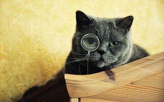 Фото бесплатно кот ученый, стол, отдых