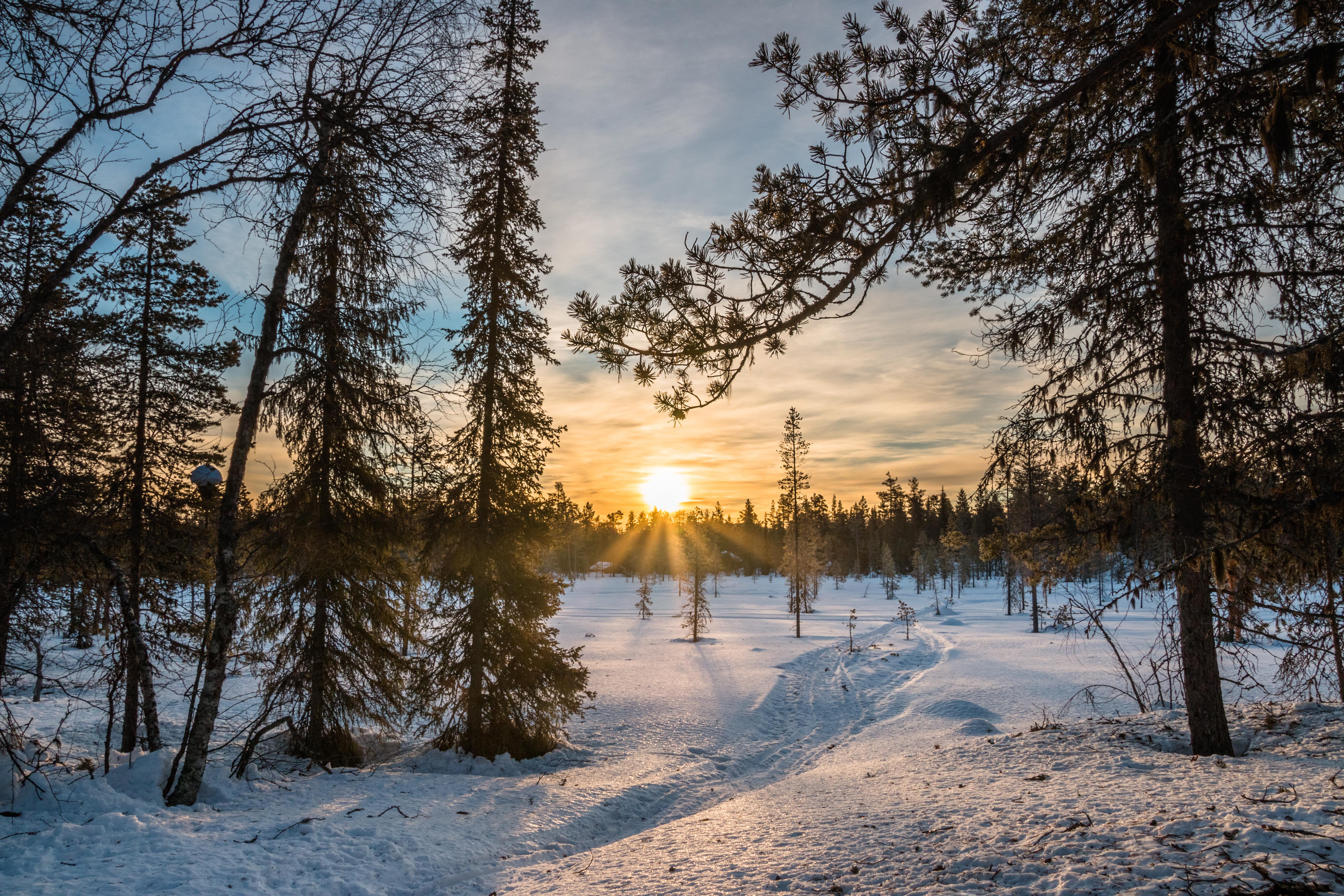 обои Лапландия Финляндия, Восход, зима, снег картинки фото