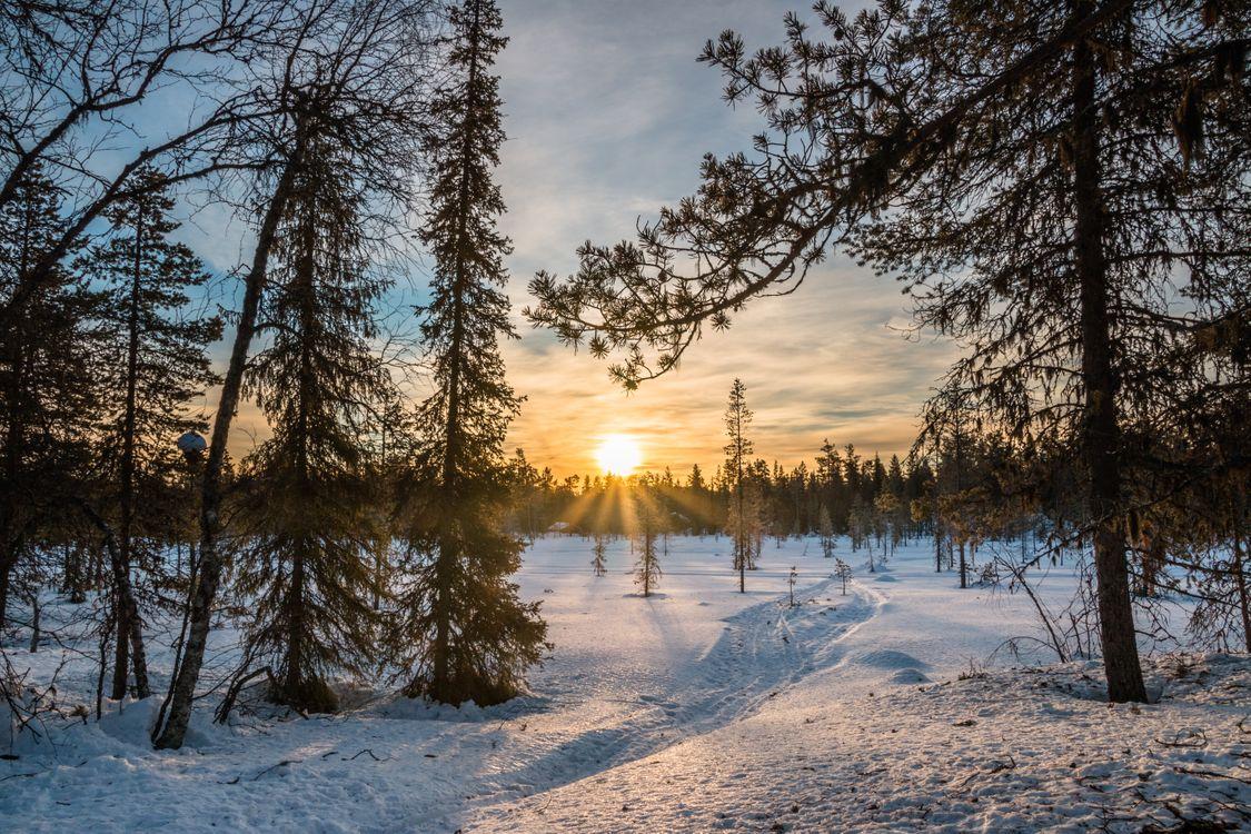 Фото бесплатно Лапландия Финляндия, Восход, зима, снег, сугробы, деревья, пейзаж, пейзажи