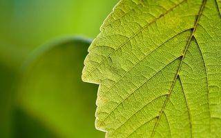 Бесплатные фото лист, зеленый, прожилки, текстура, заставка