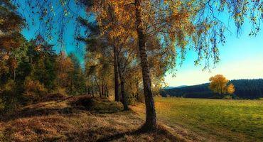 Бесплатные фото осень,лес,деревья,поле,пейзаж