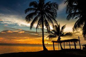 Фото бесплатно вечерний пляж, пальмы