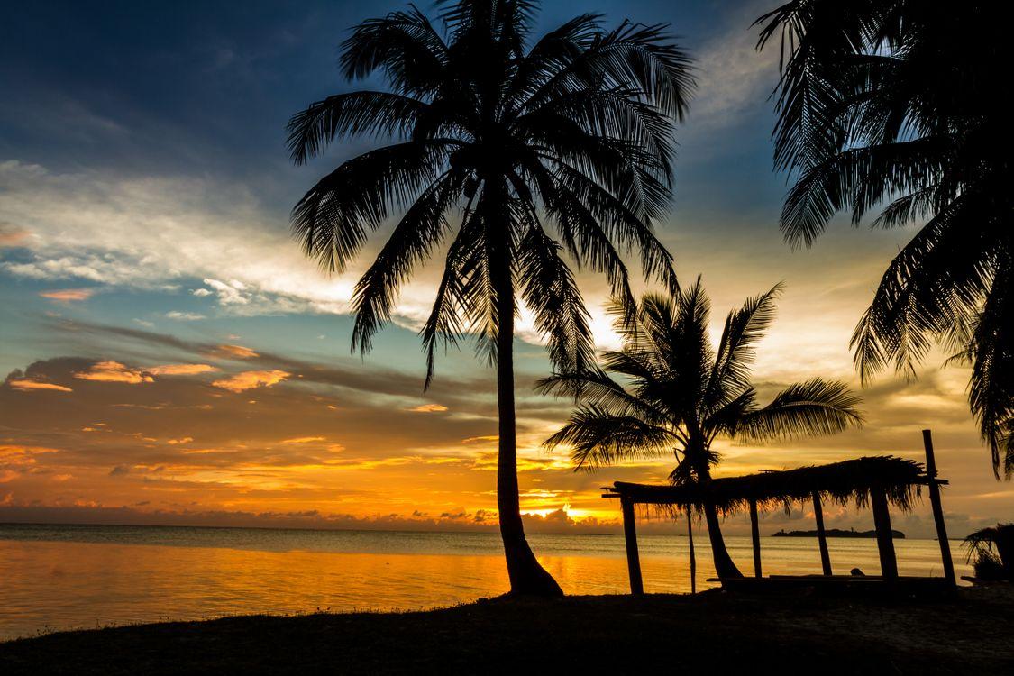 Обои вечерний пляж, пальмы картинки на телефон