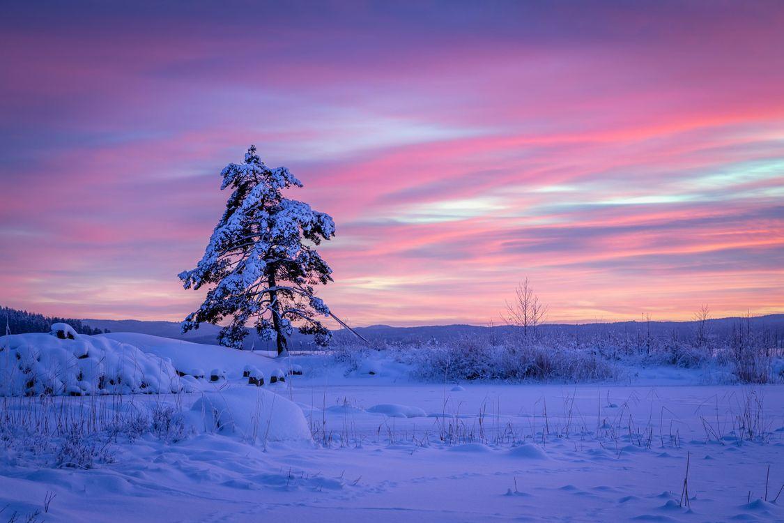 Фото бесплатно Arvika, Varmland County, Sweden, Арвика, Вермланд, Швеция, зима, снег, сугробы, закат, дерево, сосна, пейзажи