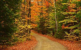 Фото бесплатно лес, тропинка, дорожка