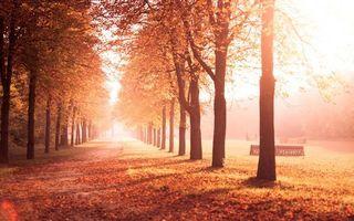 Фото бесплатно листва, Осень, аллея