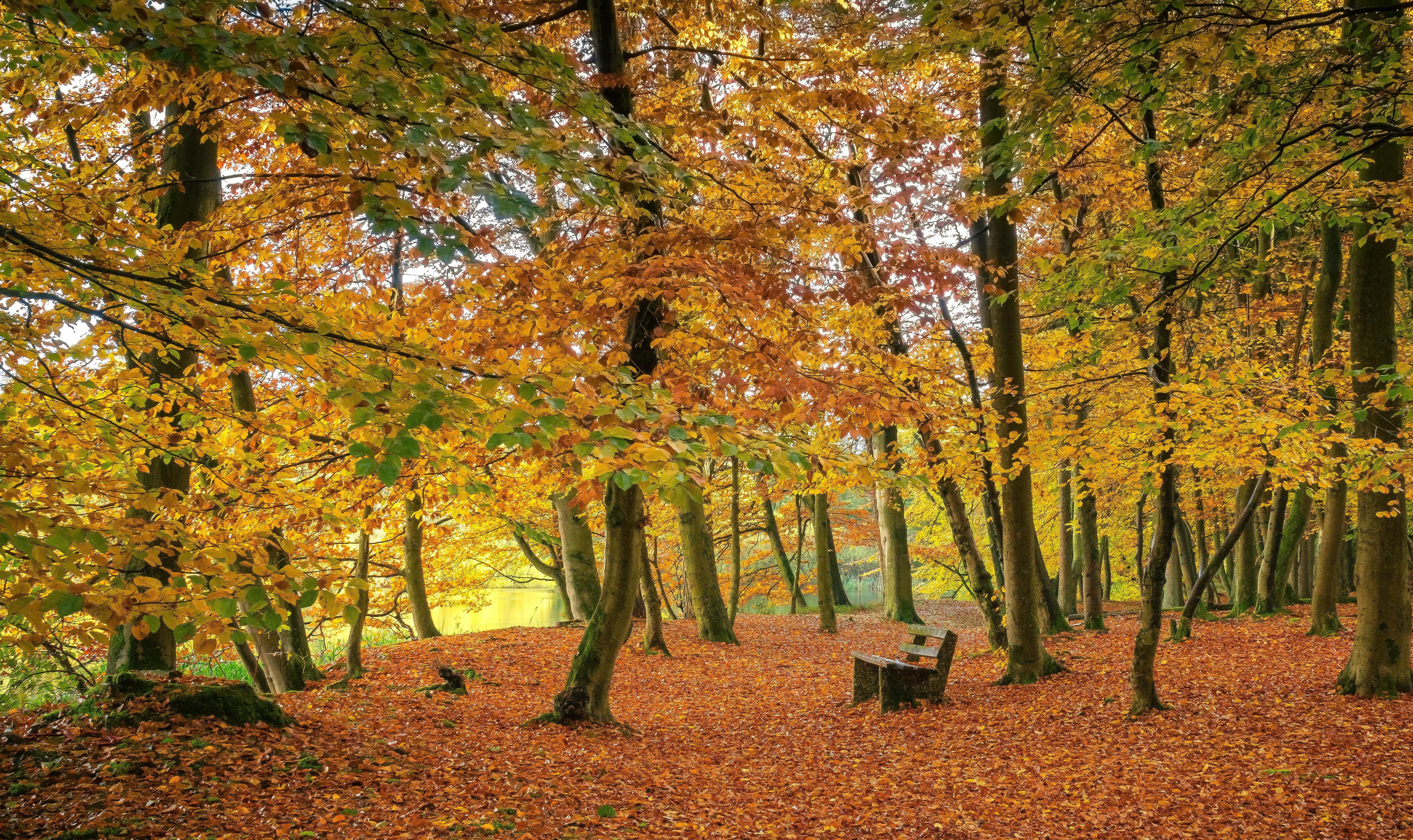 обои осень, парк, лес, деревья картинки фото