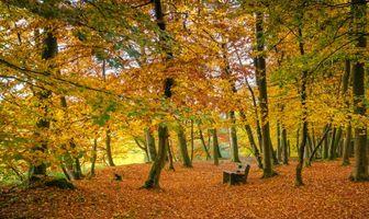 Фото бесплатно лес, пейзаж, лавочка