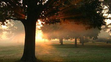 Бесплатные фото парк,трава,деревья,кроны,туман,солнце,лучи