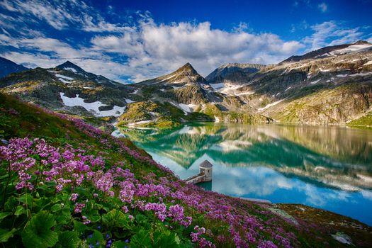 Бесплатные фото Австрия,Берге,Альпы горы,Вайсзее ледник,озеро,горы,цветы,пейзаж