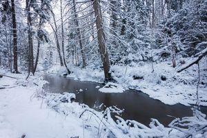 Бесплатные фото Espoo,Finland,лес,река,деревья,зима,природа
