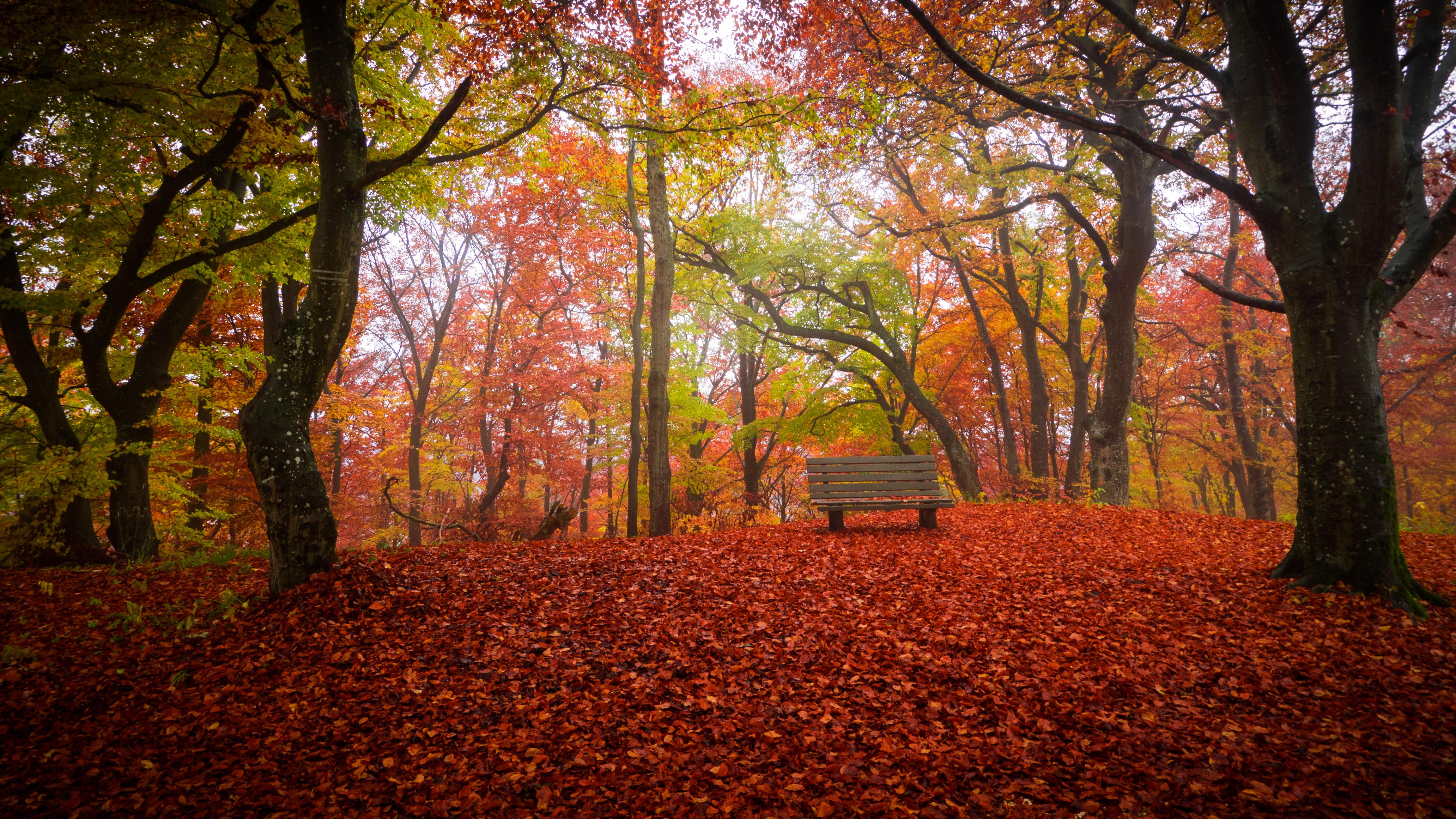 Осень, парк, лес