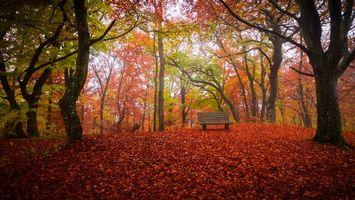 Заставки Осень, парк, лес, деревья, лавочка, пейзаж