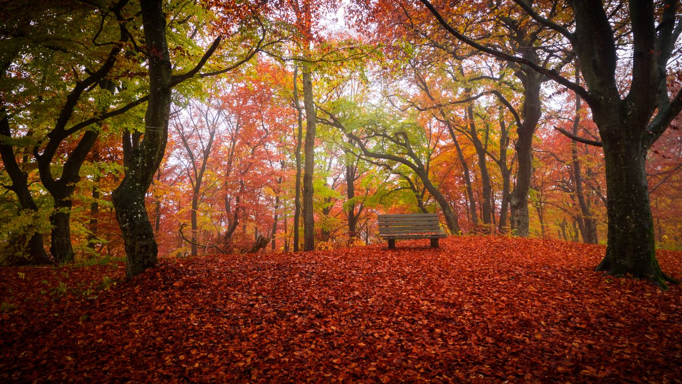 Фото бесплатно магазин, парк, осень - на рабочий стол
